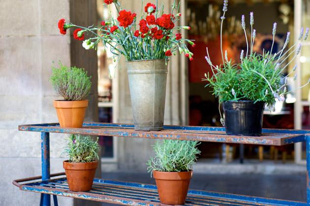 Blomster på Plaça Reial i Barcelona